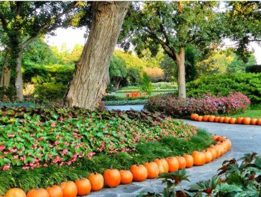 Amazingly Beautiful Pumpkins Decoration