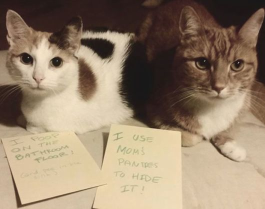 Super Adorable Pets Confessing To Their Terrible Crimes