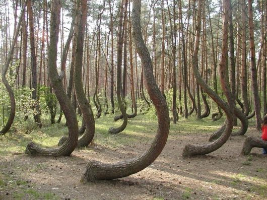 The Strange Trees In Poland