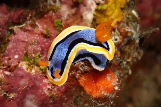 Amazing Underwater Creatures Photography