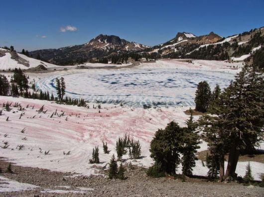 Watermelon Snow On The Sierra Nevada Mountains, California