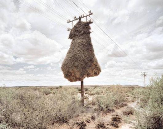 Huge Bird Nest Hanging On A Pole