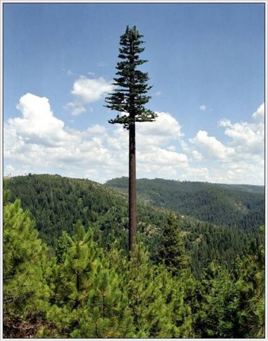 Amazing Camouflaged Cell Phone Towers