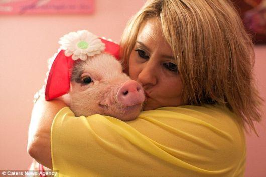Meet Penelopi the Worlds Most Pampered Pig