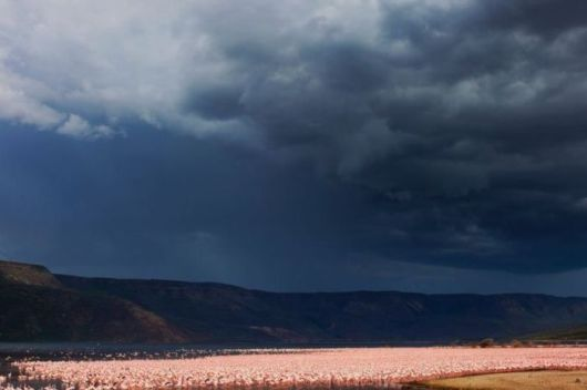 The Flamingos Of Lake Nakuru
