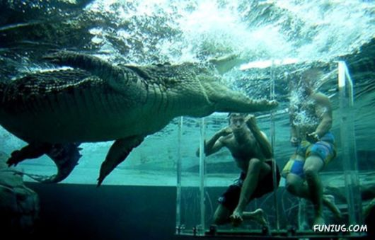 Swimming With The Crocodiles