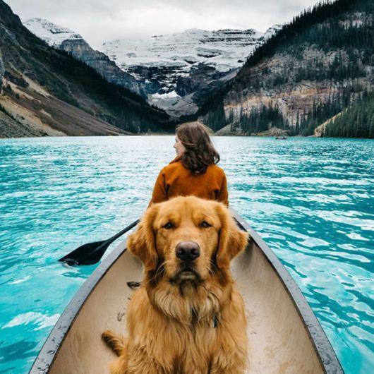 The Golden Retriever - Adventure Lover Dog Aspen