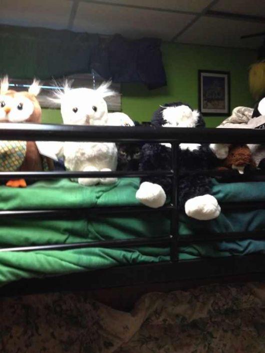 The Funny Ninja Cats