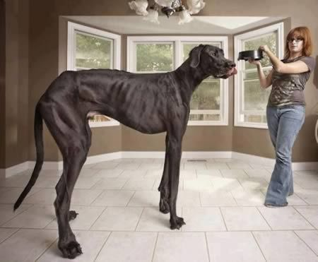 Unbelievable Animal Photos That Are Not Photoshopped